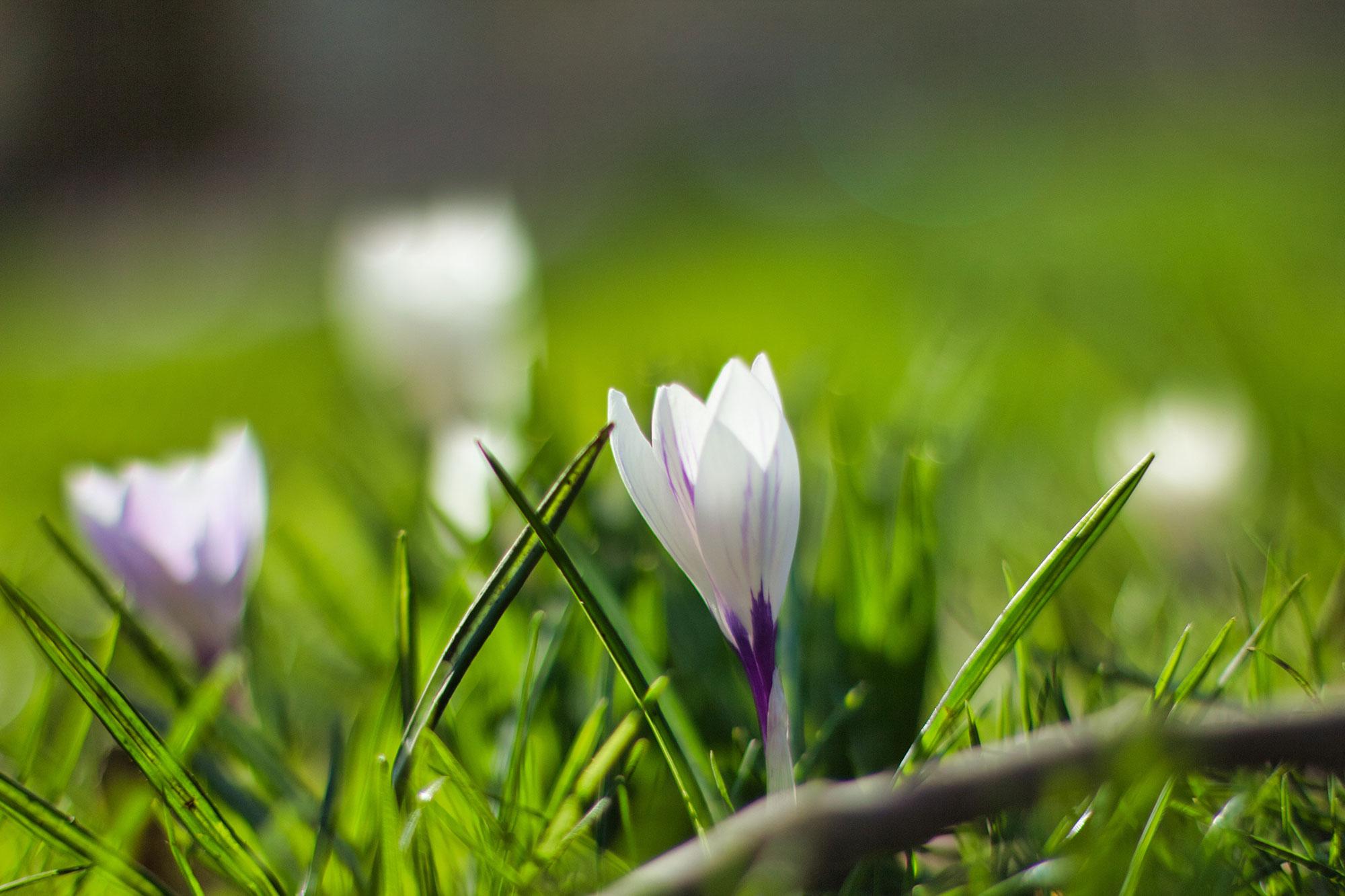 Spring 2021 – Yeovil Property Market Update